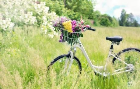 Bild Fahrrad klein