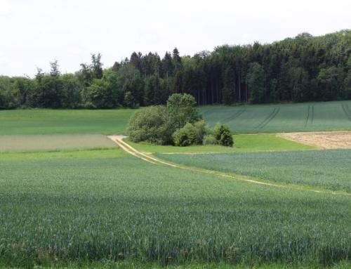 Gemeinde Amstetten: Spazierweg rund um Amstetten – Bräunisheim