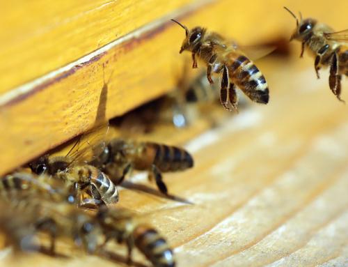 Agrardienstleistungen Fähnle; Claus Uwe Fähnle: Anschaffung eines Regiomaten zum Verkauf von Bienenprodukten