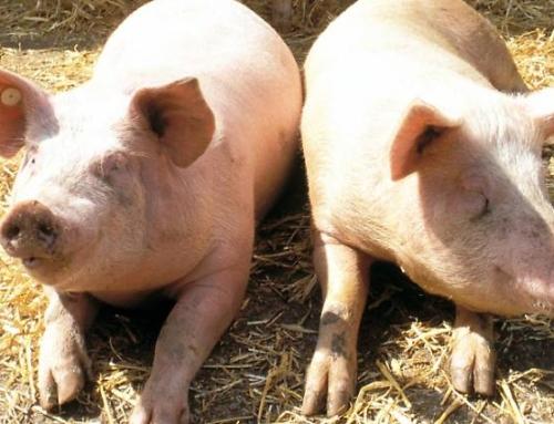 Landmetzgerei Kerler: Verkaufsautomat für Fleisch und Wurst