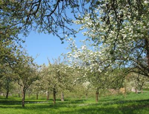 Obst- und Gartenbauverein Heldenfingen e.V.: Geräte zur Pflege von Streuobstbäumen und Streuobstwiesen